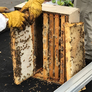 Cox Printer, Green Printer and Digital Media Company. Bee Harvest