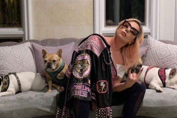 """Los bulldogs franceses de Lady Gaga han sido encontrados sanos y salvos, dos días después de haber sido robados a punta de pistola en Los Ángeles. Koji y Gustav fueron entregados en la comisaría de policía de la comunidad olímpica de LAPD el viernes por la noche por una mujer que parece """"no estar involucrada y no estar asociada"""" con el robo a mano armada."""