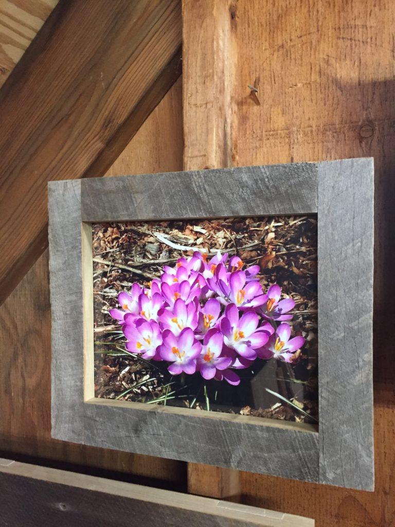 Revival Designs Tulip Poplar Frame
