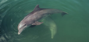 Tampa Bay Dolphin Tour