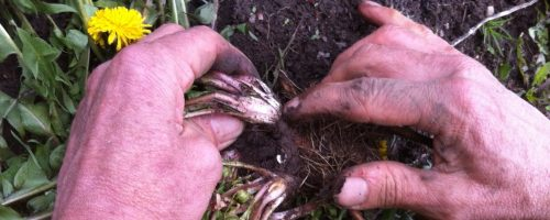 Killaloe Herbal Project