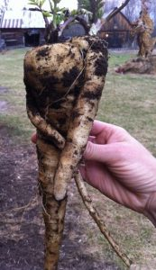 parsnip hug