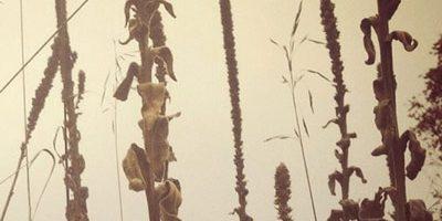 The Shamanic Origins of Herbalism