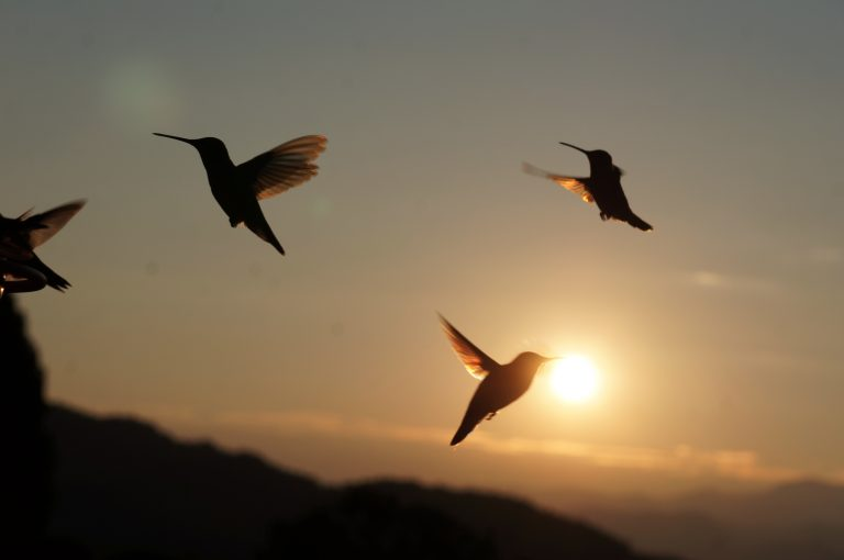 Hummingbird Sunrise by Mike Lewinski
