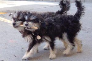 double dog clones