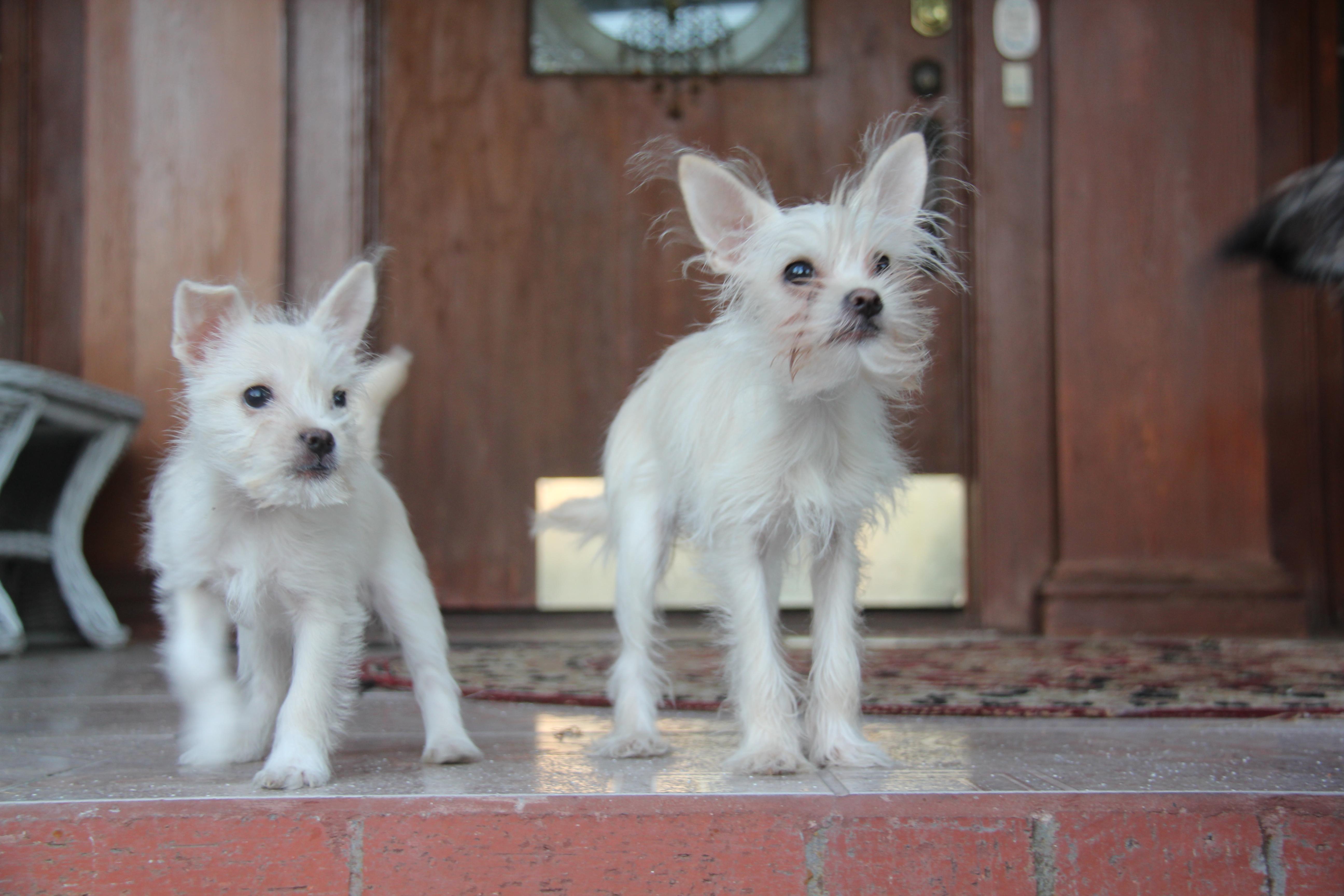 Bubble Rubble and Bubble Facer dog clones