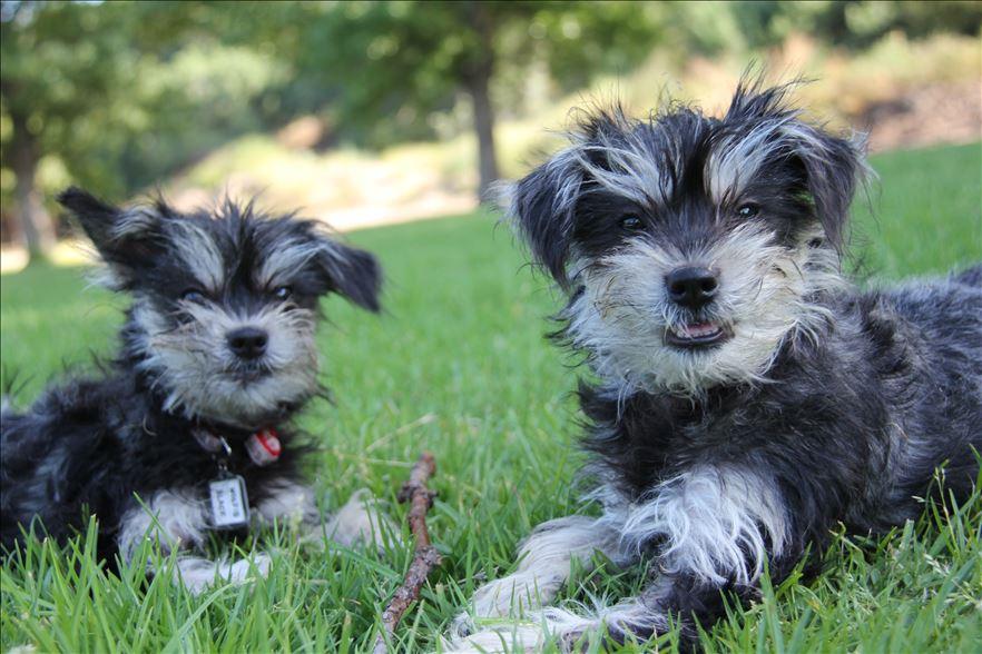 2 dog clones on the grass