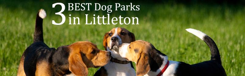 3 Best Dog Parks in Littleton