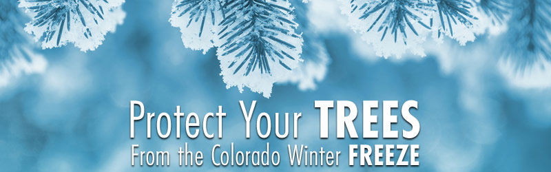 Protect Your Trees From The Colorado Winter Freeze
