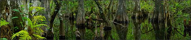 pic_wetlands_del_lrg