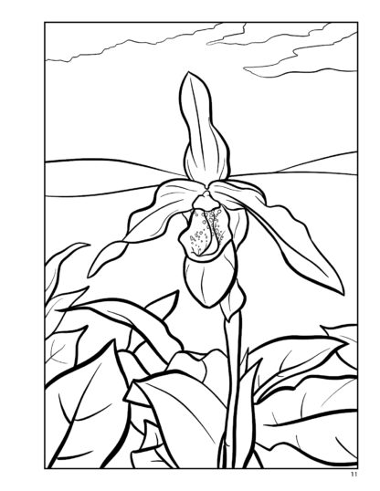 Orchid Relaxing Adult Coloring Book by Kayleel image 5