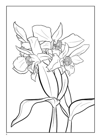 Orchid Relaxing Adult Coloring Book by Kayleel image 3