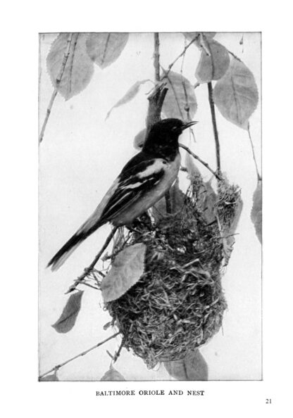 Complete Book of Birds Image 5