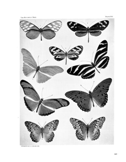 The Complete Butterfly Book: Enlarged Illustrated Special Edition image 9