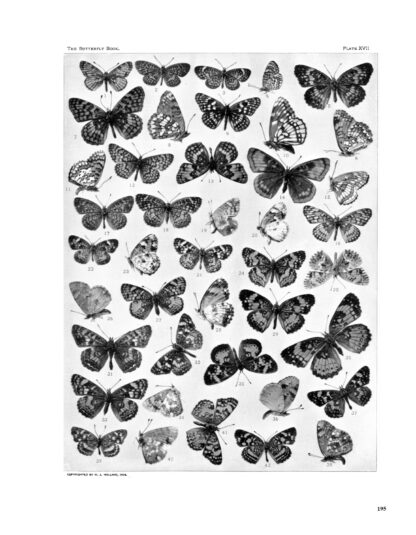 The Complete Butterfly Book: Enlarged Illustrated Special Edition image 12
