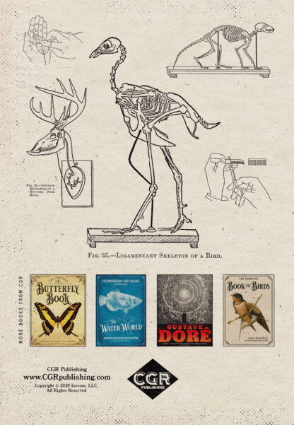 The Art of Taxidermy: Enlarged Illustrated Special Edition Back Cover