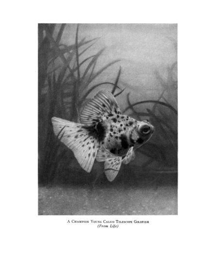 Goldfish Varieties and Tropical Aquarium Fishes: A Classic Illustrated Guide to Aquaria image 1