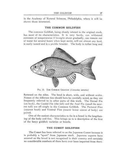 Goldfish Varieties and Tropical Aquarium Fishes: A Classic Illustrated Guide to Aquaria image 3