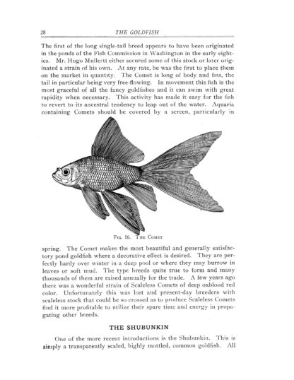 Goldfish Varieties and Tropical Aquarium Fishes: A Classic Illustrated Guide to Aquaria image 4