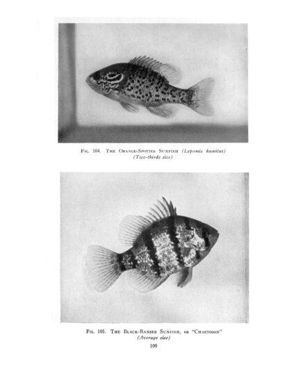 Goldfish Varieties and Tropical Aquarium Fishes: A Classic Illustrated Guide to Aquaria image 6