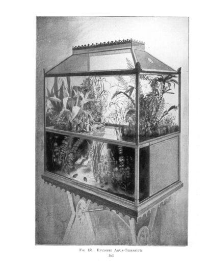 Goldfish Varieties and Tropical Aquarium Fishes: A Classic Illustrated Guide to Aquaria image 8