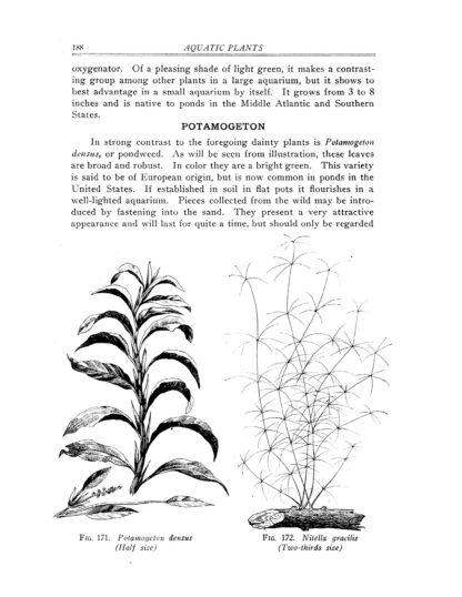Goldfish Varieties and Tropical Aquarium Fishes: A Classic Illustrated Guide to Aquaria image 9
