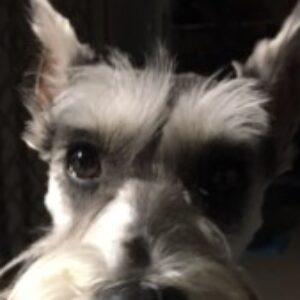 Profile photo of Dale