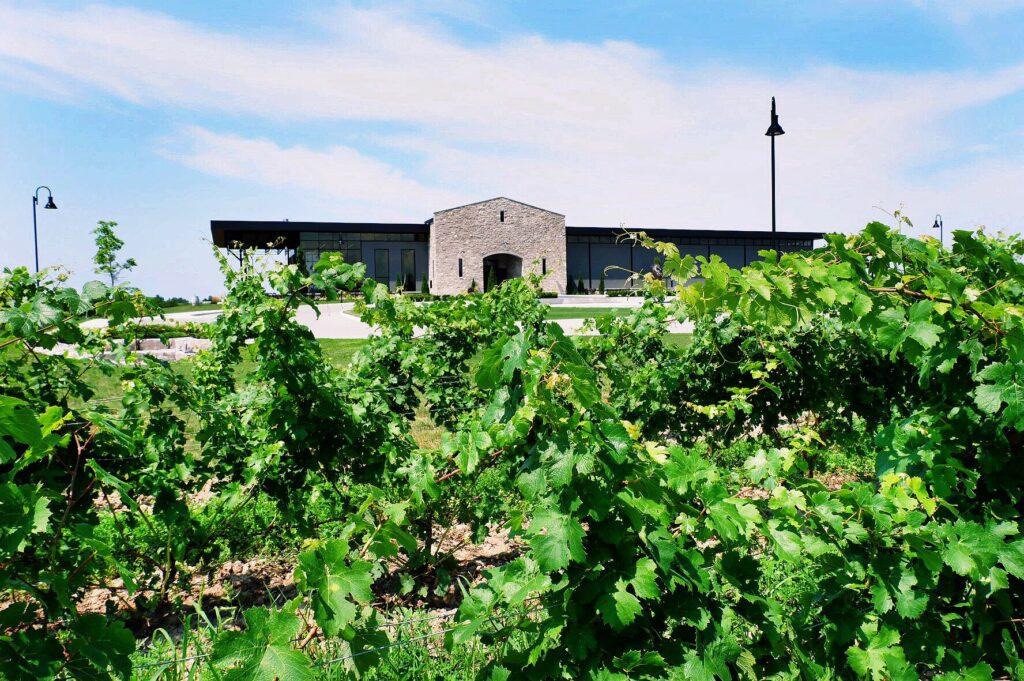 Dark Horse Estate Winery Vineyard