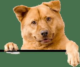 A Happy Tail Pet Service