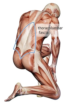myofascial release therapy works on the fascial system to relieve pain