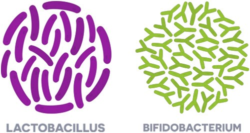 Lactobacillus acidophilus and Bifidobacterium are the probiotic strains that will provide the most benefit to your skin.