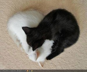 kitty heart
