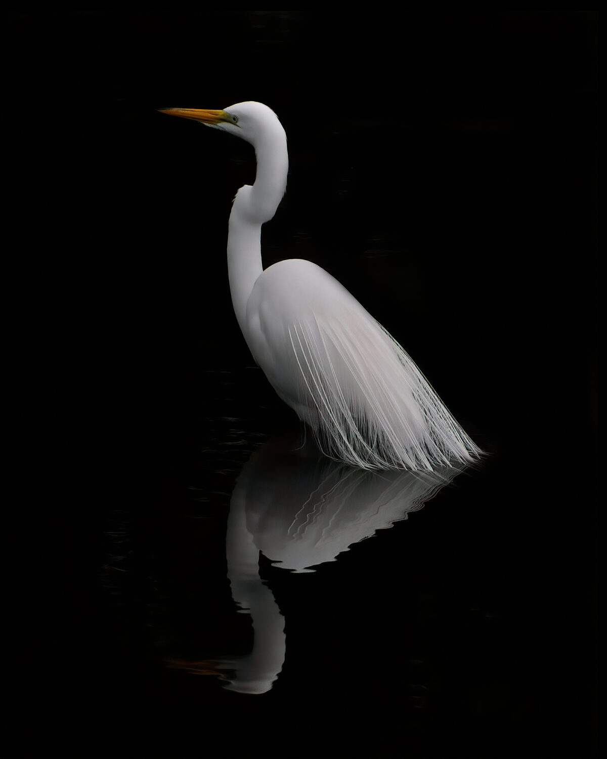 Egret Reflection by Linda ONeill