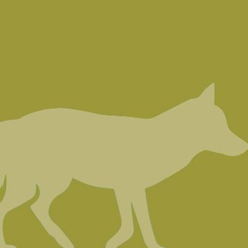 Gray Fox YRWS
