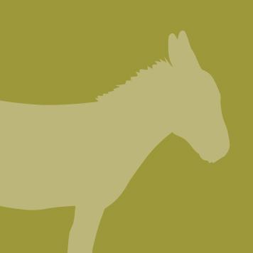 YRWS Miniature Donkey