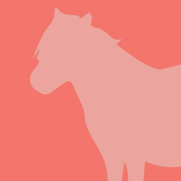 YRWS Miniature Horse