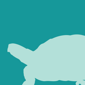 Yellow River Wildlife East Box Turtle Icon