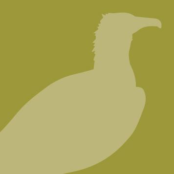 Black Vulture icon
