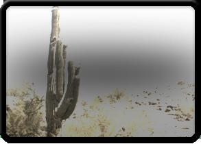 Tile_Wild-West---Scorpion-Gulch-AZ