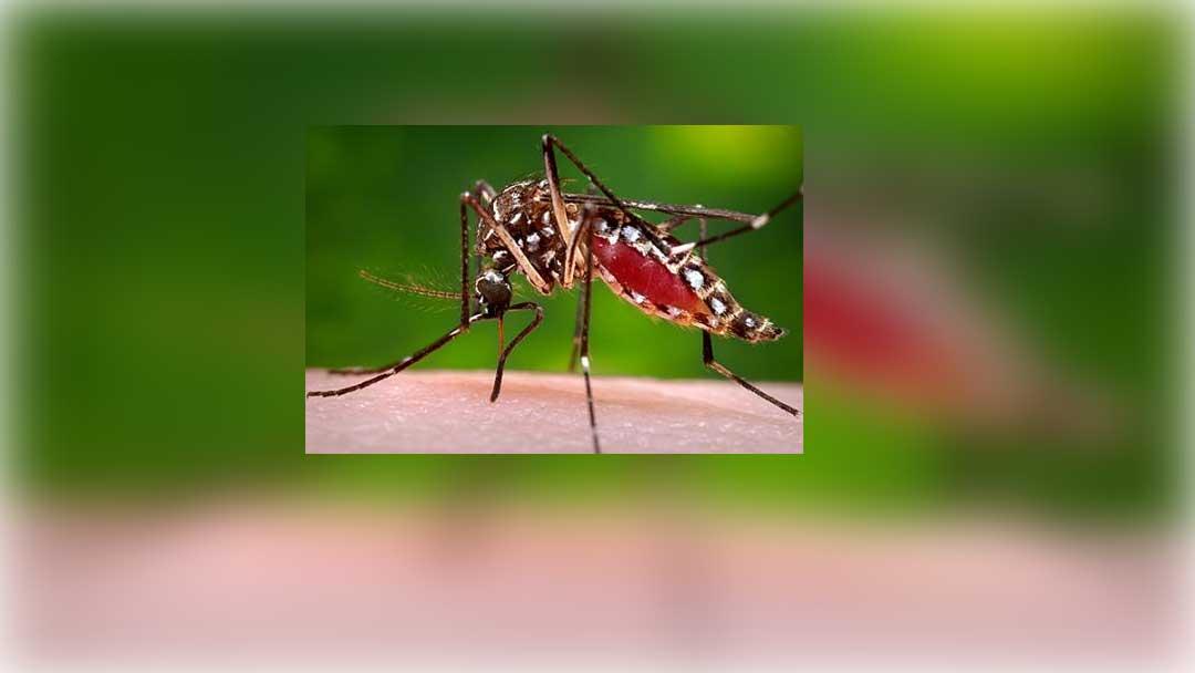 डेंगू रोकने के लिए स्वास्थ्य विभाग ने बनाया माइक्रोप्लान