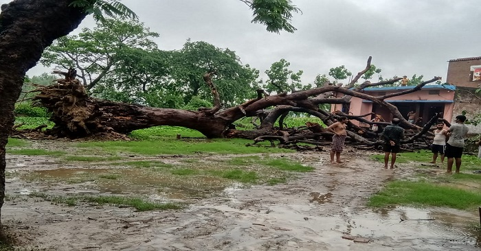 घर के सामने गिरा विशाल पेड़, बाल-बाल बचे लोग, 5 गांवों में विद्युत आपूर्ति बाधित