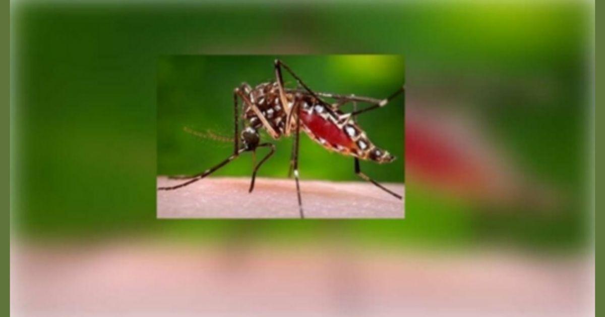 बलिया जिले में बढ़ने लगे हैं डेंगू के मरीज, कुल 28 पीड़ित