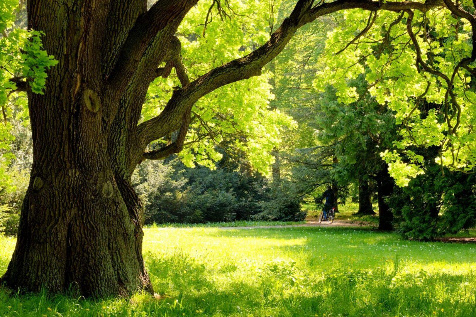 Economy Tree Service