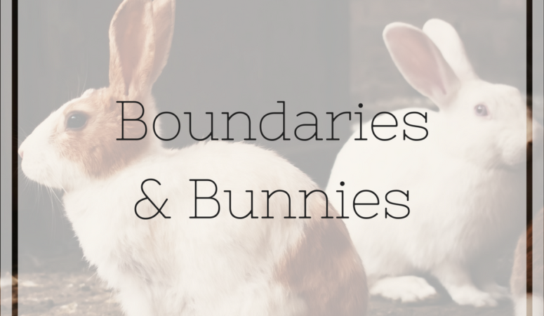 On Bunnies and Boundaries