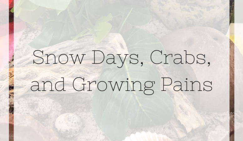 Snow Days, Crabs, and Growing Pains