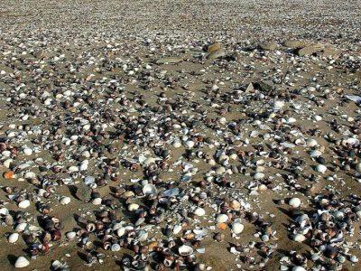 shells-on-beachs-sand-725x544