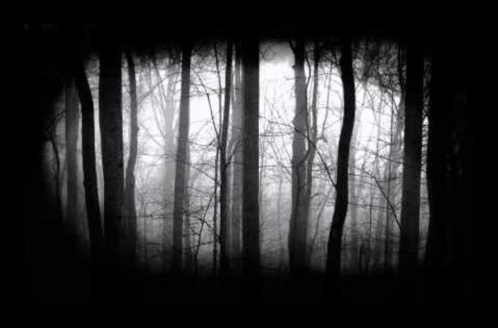 Fiction: A Dream of Malice