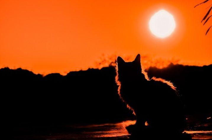 Fiction: The Cat