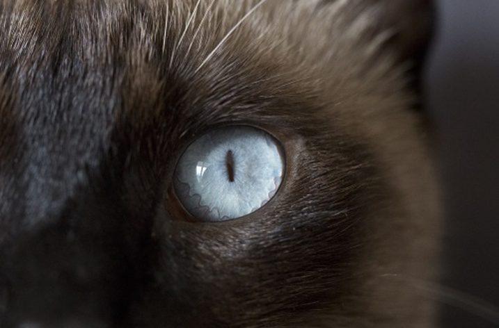 Fiction: A Cat Named Gretchen
