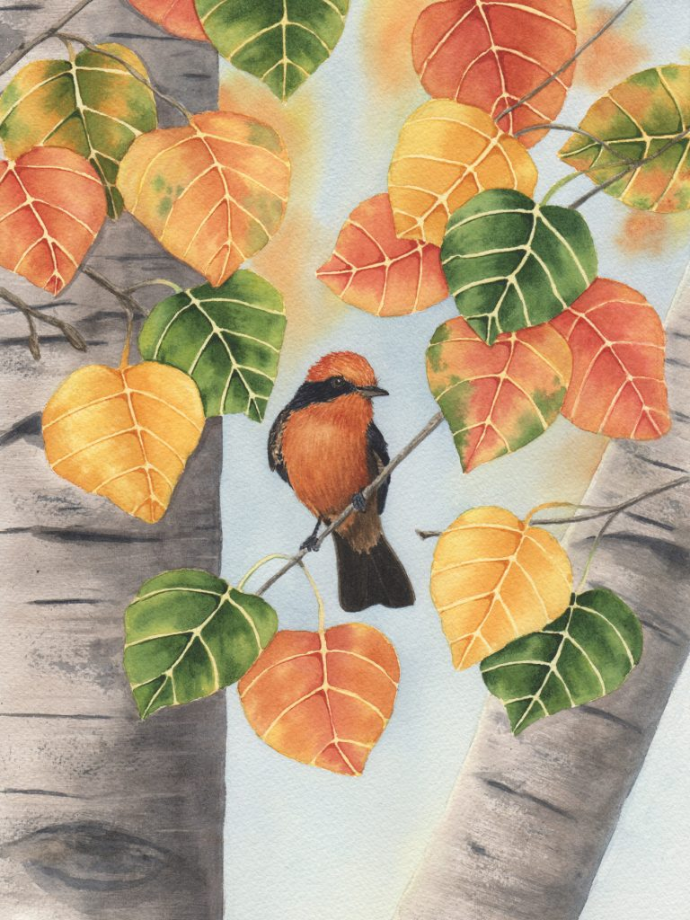 """Vermilion Flycatcher Original Available (14"""" x 18"""") Giclees and Prints Available"""